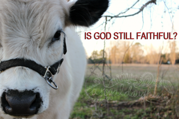 is God Still Faithful?